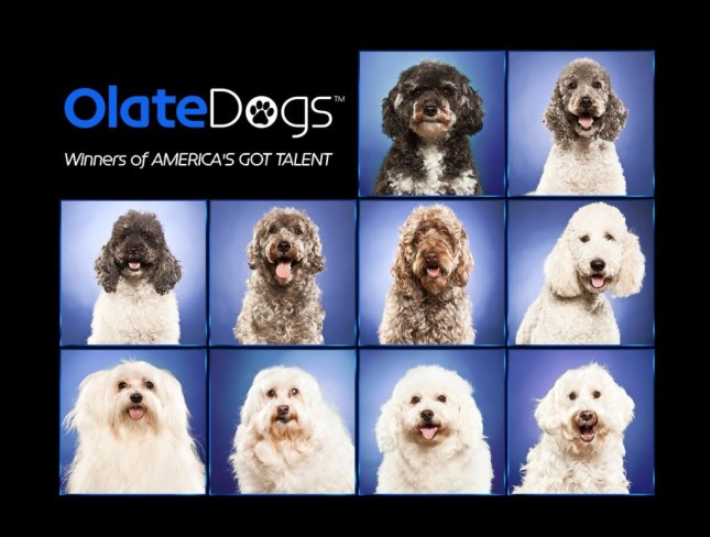 Olate-Dog-1024x776