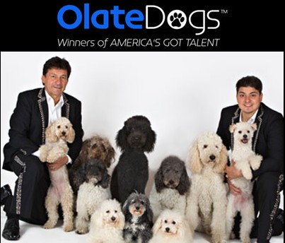 Olate-Dogs-photo